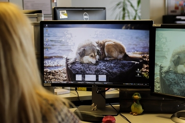 Bildschirm mit Hündin Happy als Desktopbild